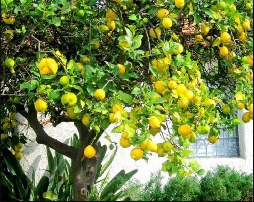 Cómo energizar tu casa de forma positiva con Canela y Limón