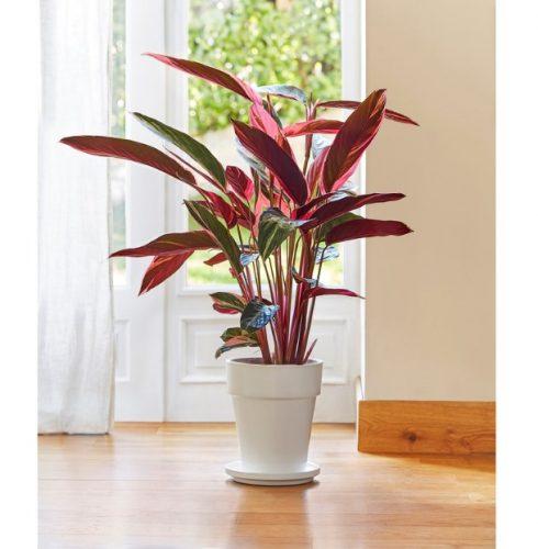 5 Plantas para interiores