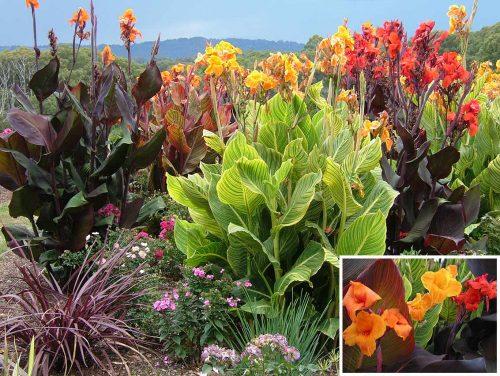Ideas encantadoras para decorar con plantas y flores