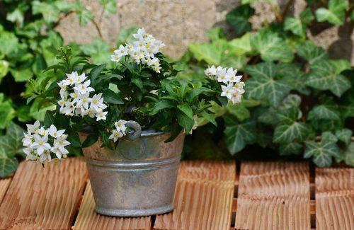 7 Plantas para maravillosas para aliviar el stress que debes tener en casa