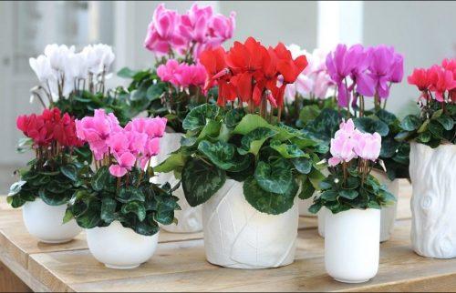 Cómo mantengo mis plantas hermosas y saludables