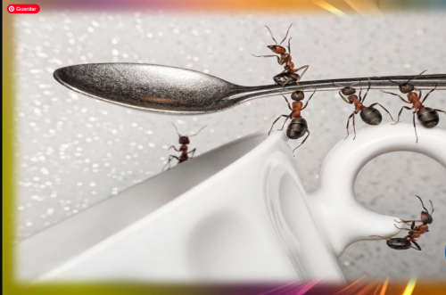 Pero si las hormigas ya han aparecido deberás tomar una serie de medidas: Sella cualquier grieta por donde puedan colarse. Hazlo con silicona o yeso. Limpia el suelo a fondo con lejía y agua (la lejía se llama también lavandina o cloro). Evita que haya migas o líquidos dulces en el suelo o cualquier superficie. Remedios caseros para eliminar hormigas del hogar